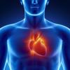 Human Body Parts : Heart Quiz