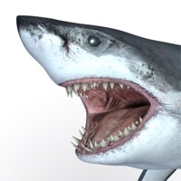 Codes for Talking Great White : My Pet Shark Hack
