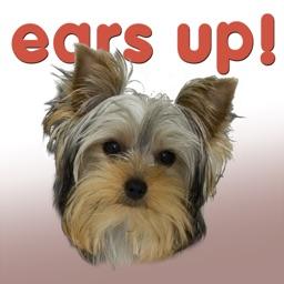 Ears Up!