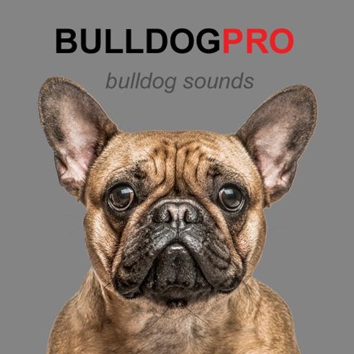 Bulldog Sounds & Barks