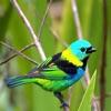 Cute Lovely Little Birds Photos & Wallpapers
