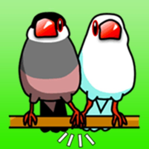 Bird Love!
