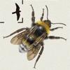 British & Irish Bumblebees - iPhoneアプリ