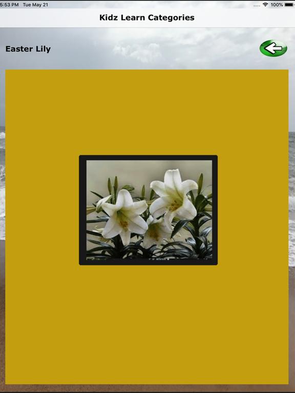 Kidz Category - Middle & Asia screenshot 13