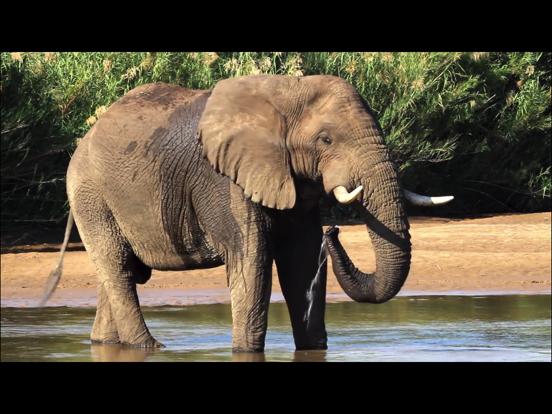 Video Touch - 野生の動物のおすすめ画像2