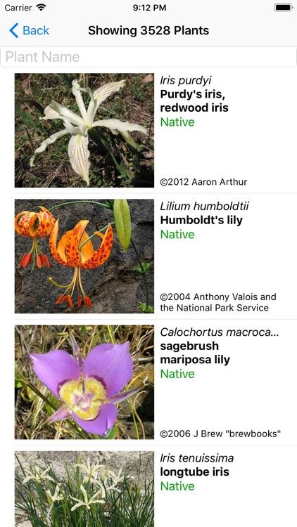 North California Wildflowers
