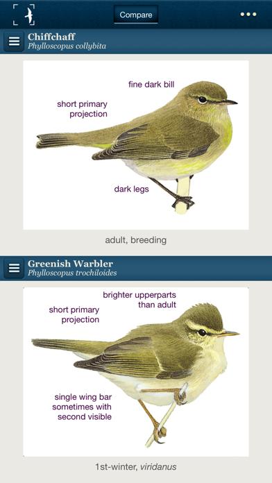 Birds of Northern Europeのおすすめ画像2