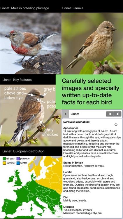 Birds of Britain Lite