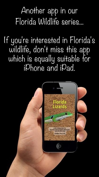 Florida Lizards