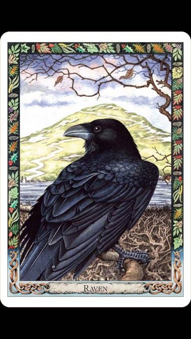Druid Oracle Cardsのおすすめ画像2