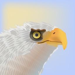 Eagle Escapade