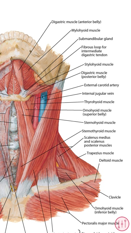 Anatomy Atlas, USMLE, Clinical screenshot-3