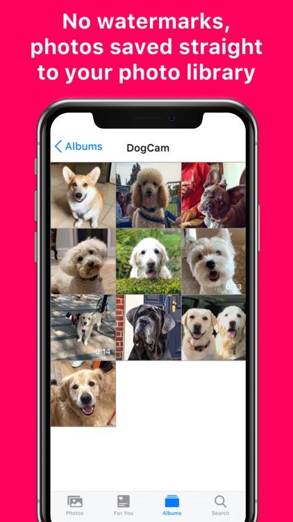DogCam - Dog Selfie Camera screenshot-4