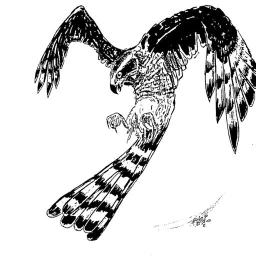 BC iSpecies Goshawk icon