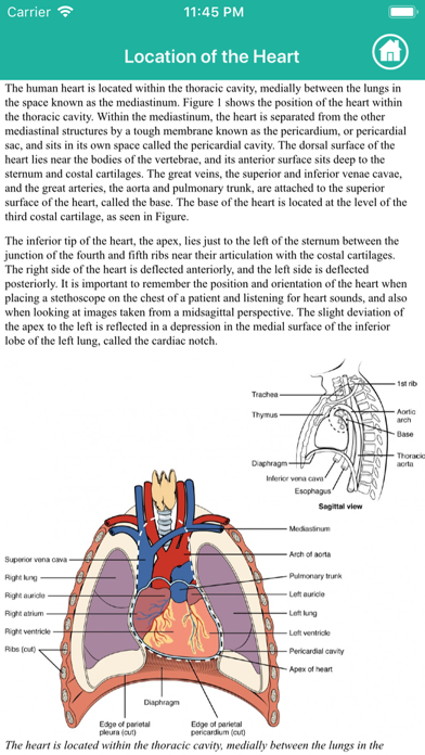 Learn Heart Anatomy screenshot 8