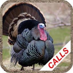 Turkey Hunting Calls -
