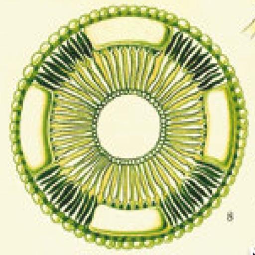 Urea Cycle Tutor