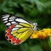 Butterflies 2.0 Reviews