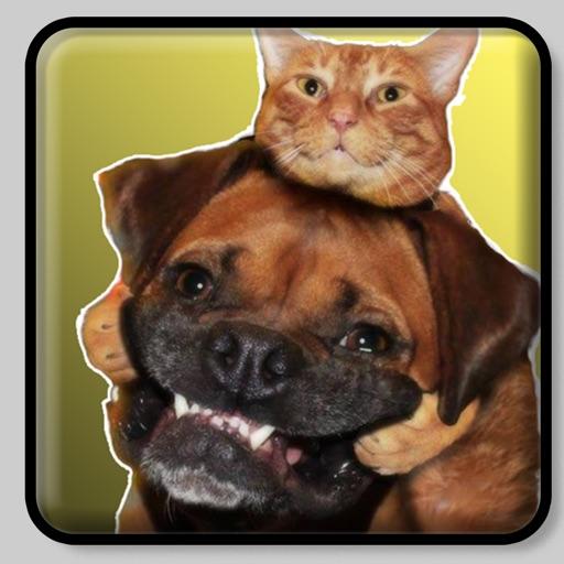 Figurinhas de - Gatos e Cachor