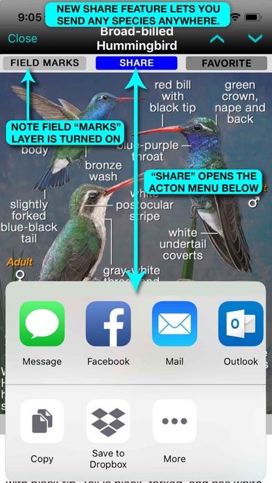 iBird Plus Guide to Birds Screenshot