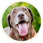 Lovely Labrador Sticker Pack