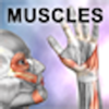 Real Bodywork - Learn Muscles: Anatomy artwork