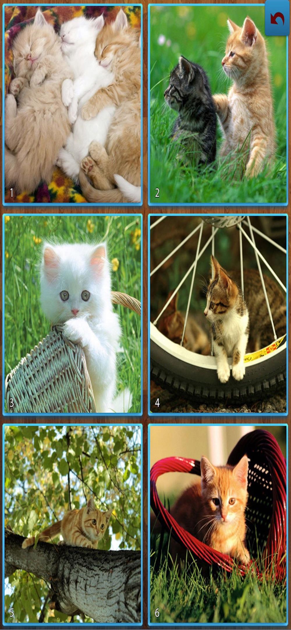 Cats Jigsaw Puzzles – Titan Cheat Codes