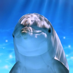 Tap Dolphin -simulation game-