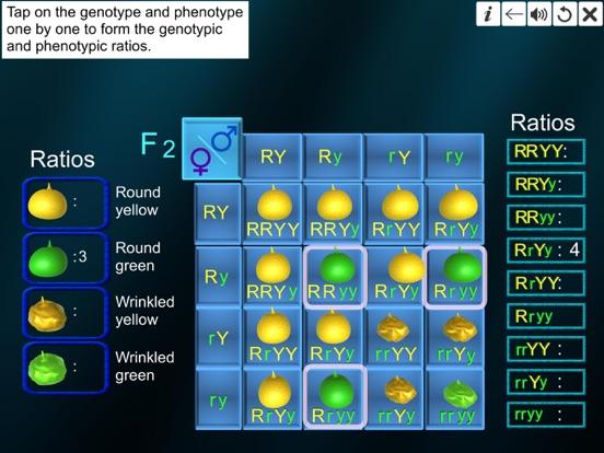 Dihybrid cross screenshot 20
