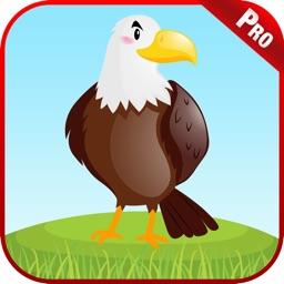Bird Sounds Animal Kids Games
