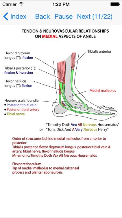 Anatomy Lectures Limbs screenshot-3