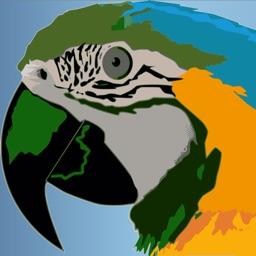 Bird Breakout