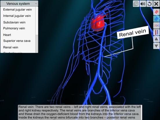 Vascular system screenshot 12