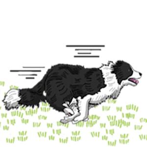 Border Collie Dog Icon Sticker - Stickers app