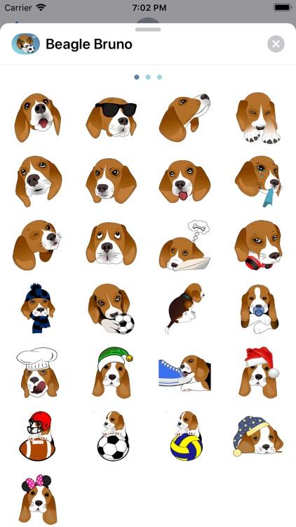 Beagle Bruno