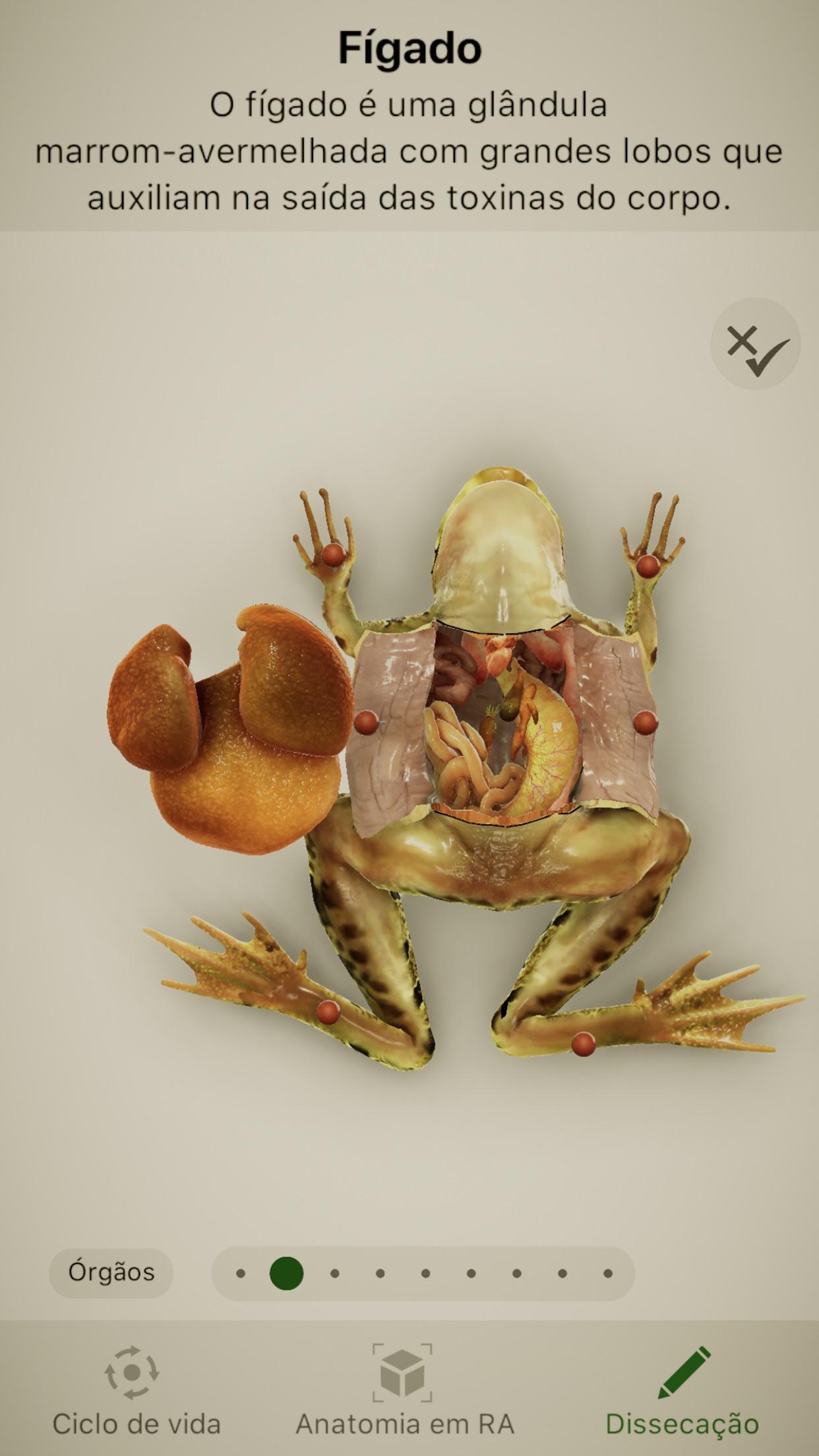 Screenshot do app Froggipedia