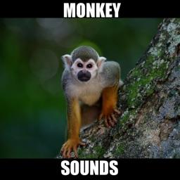 Monkey Sounds! Animal Sounds.!