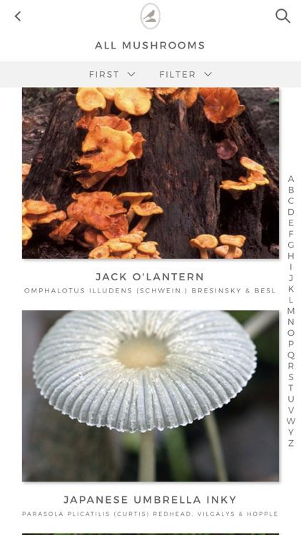 Fieldstone Guide: Mushrooms