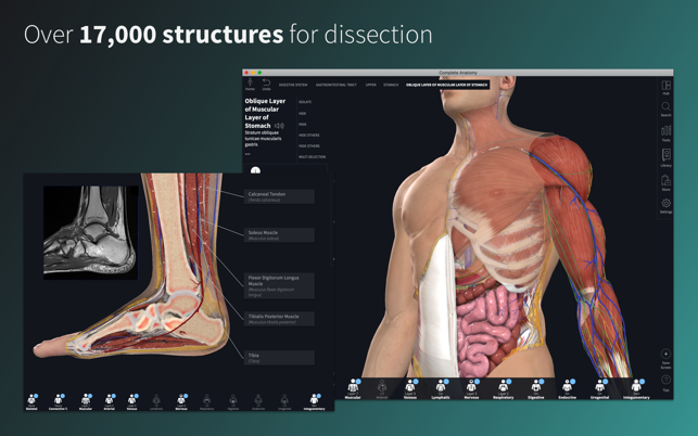 Complete Anatomy Platform 2020 on the Mac App Store