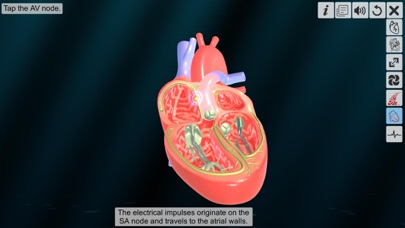 Heart - An incredible pump screenshot 6