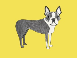 Illustrated Sticker Pack for iMessage by dog lover and artist Elizabeth Boylan
