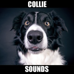 Collie Dog Sounds