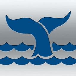 Marine Fauna sightings