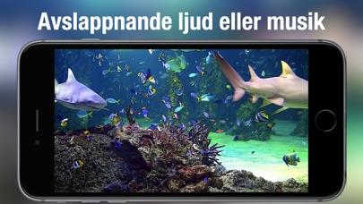Akvarium Live HD på PC