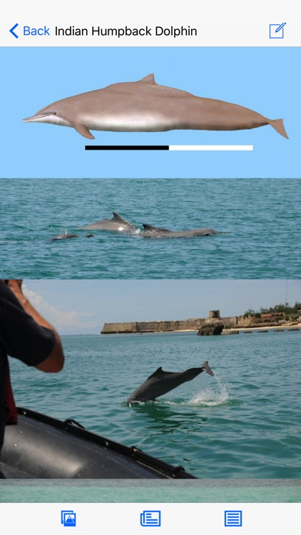 Dolphins and Whales screenshot-2