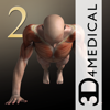 iMuscle 2 - iPhone Edition - 3D4Medical.com, LLC