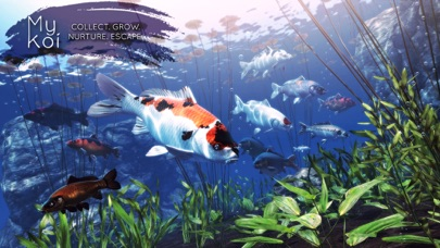 Screenshot for My Koi in United States App Store