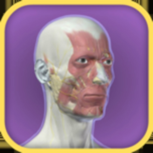 3D Facial Anatomy Tool