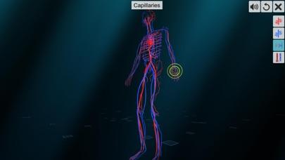 Vascular system screenshot 5