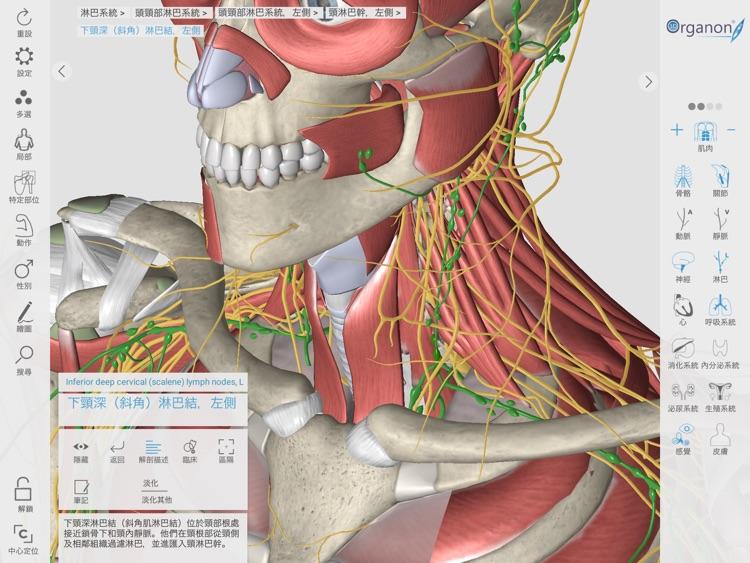 3D Organon Anatomy Enterprise screenshot-7